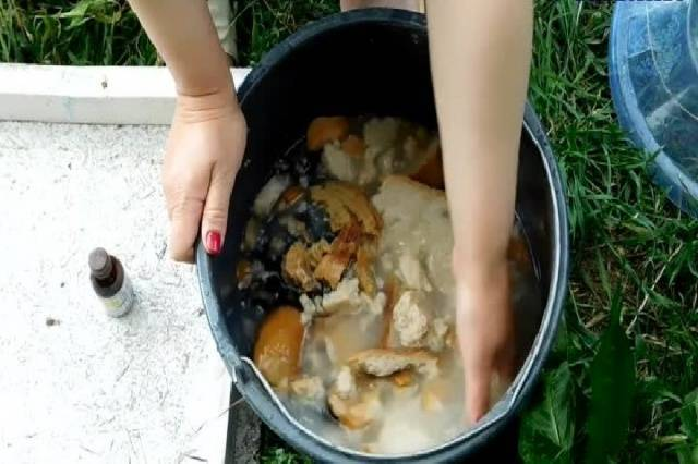 Хлебная подкормка для огурцов – рецепт приготовления