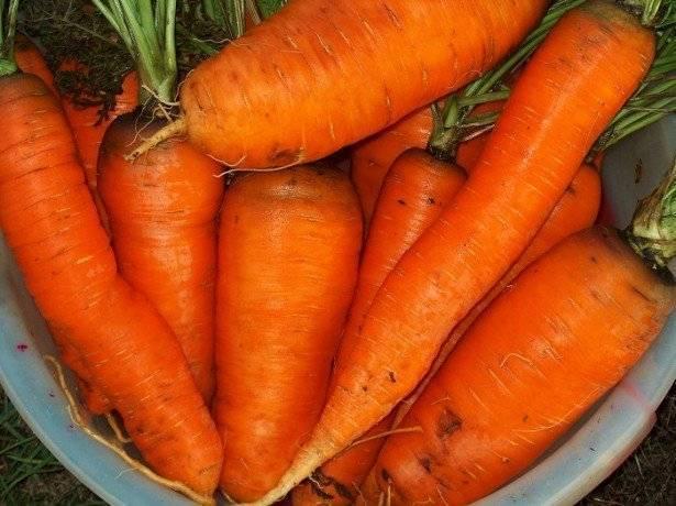 Морковь – полезные свойства, вред и состав продукта