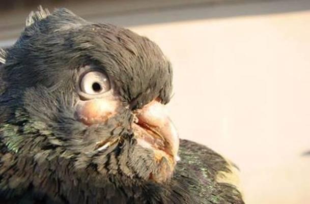Птичий грипп | симптомы и лечение птичьего гриппа | компетентно о здоровье на ilive
