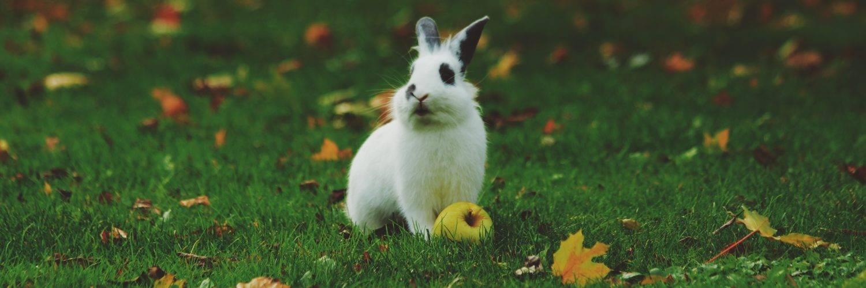 Можно ли давать кроликам капусту