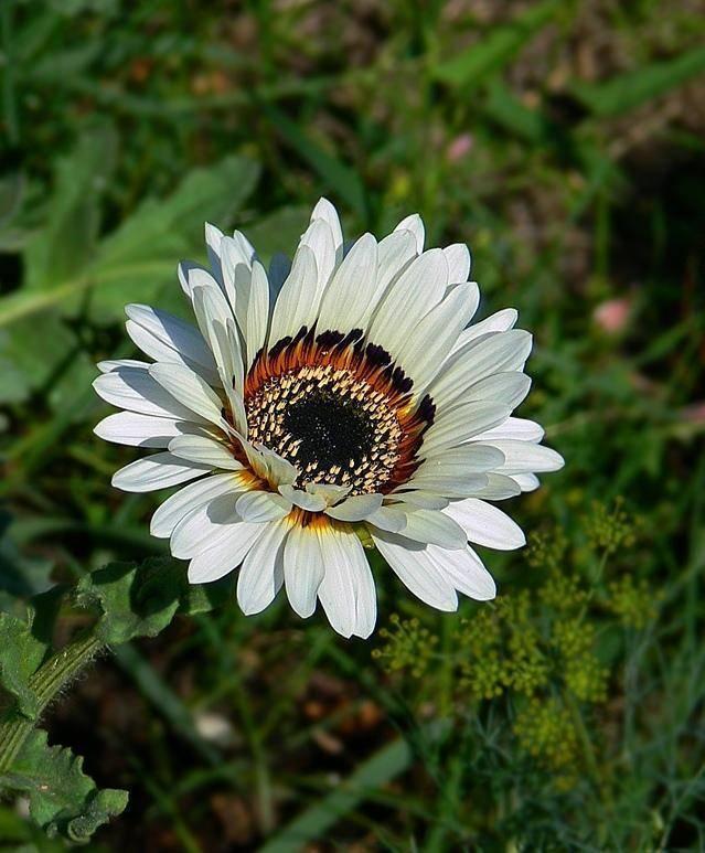 Венидиум посадка и уход фото выращивание из семян в домашних условиях фото сортов