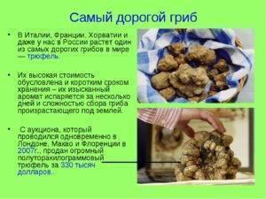 Самые дорогие грибы в мире: список
