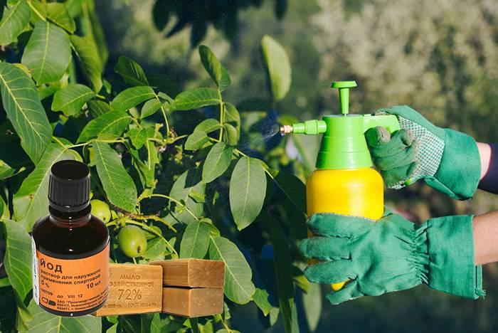 Как избавиться от тли народными средствами в домашних условиях, чем обрабатывать растения