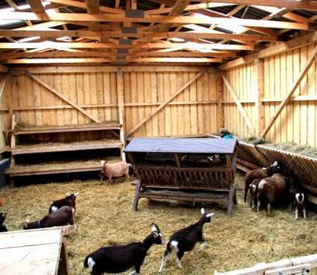 Все о сараях для коз