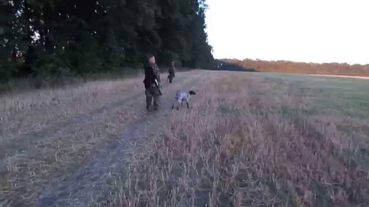 Охота на перепела. открытие охоты на перепела :: syl.ru
