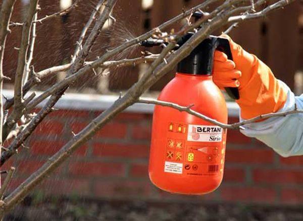 Апрельская обработка яблонь в 2019 году: самые опасные болезни и вредители, схемы защитных обработок   теплотехники