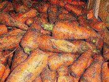 Выращивание моркови в открытом грунте: полезные советы