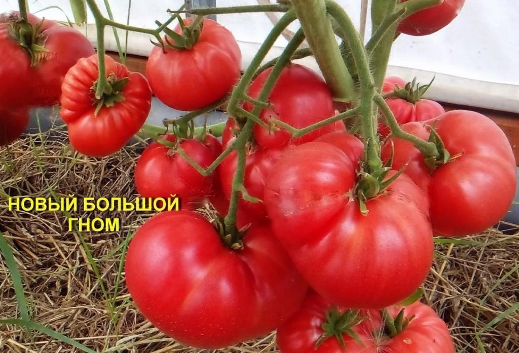 Томат гном: характеристика и описание сорта, отзывы, фото