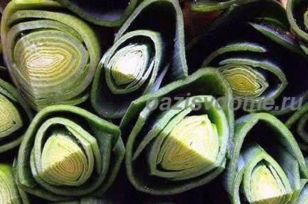 Описание, характеристика и особенности выращивания лука-порея победитель