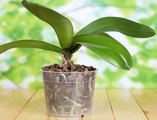 Какая бывает кора для орхидей: какая нужна и как подготовить