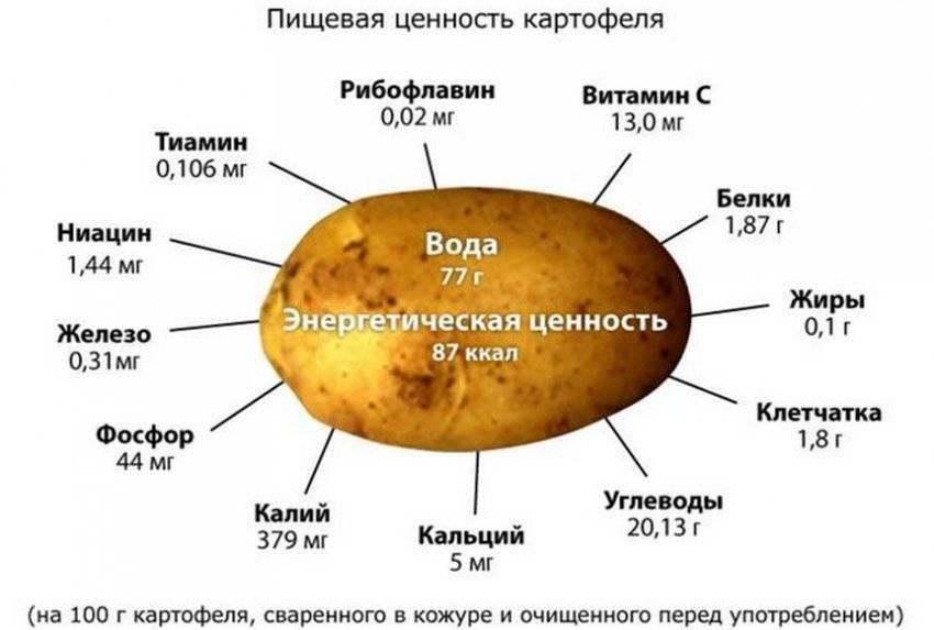 Химический состав картофеля и пищевая ценность