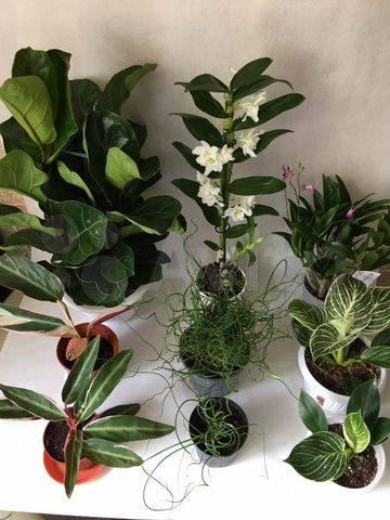 Уход за фаленопсисом в домашних условиях после магазина: правила покупки орхидеи, а также как пересаживать и соблюсти карантин для адаптации растения?