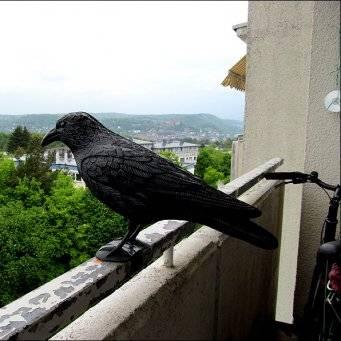 Как отпугнуть птиц с огорода — схема отпугивателя своими руками
