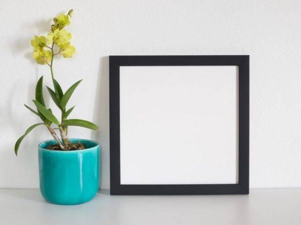 Цеофлора для орхидей: отзывы, как применять