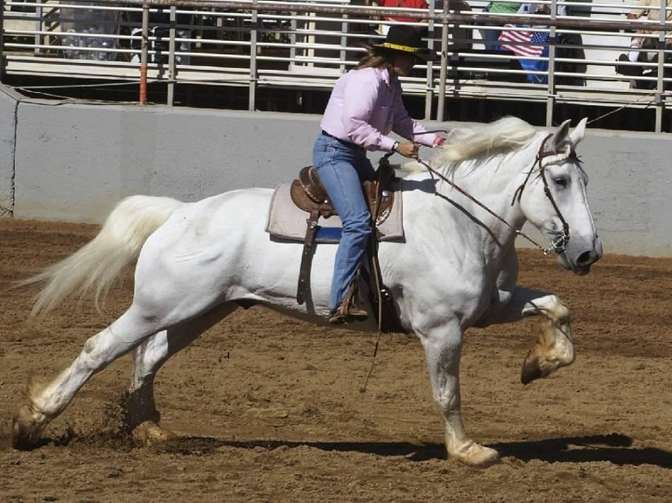 Лошади породы першерон: история, предназначение и описание коней