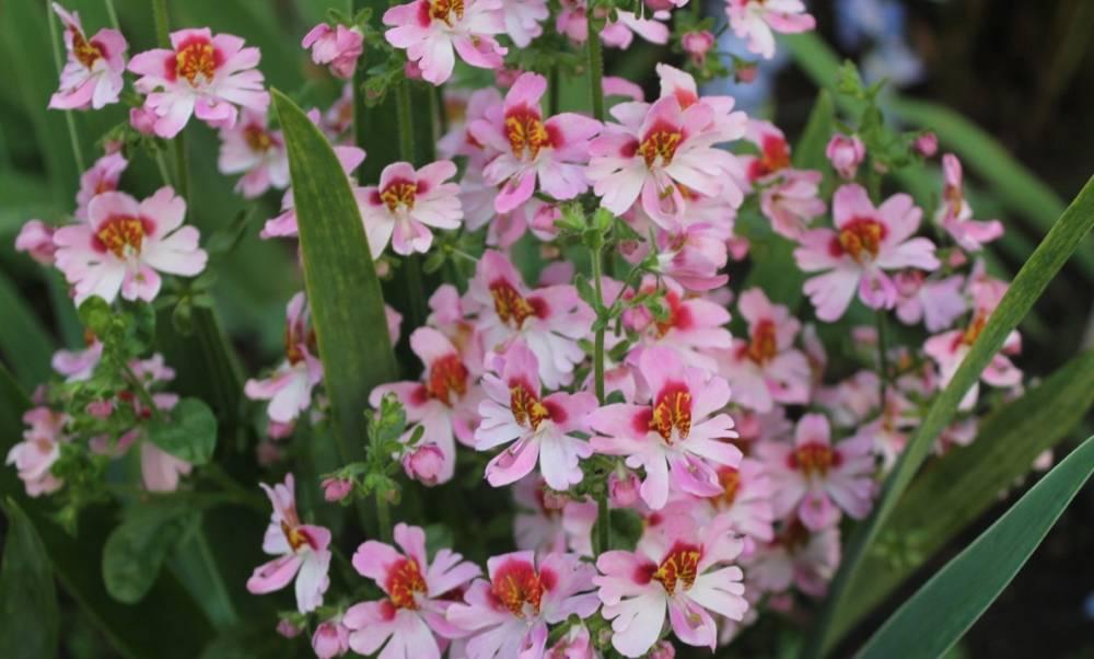 Какие цветы похожи на орхидею