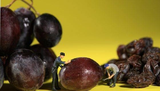 Сорт винограда — кишмиш