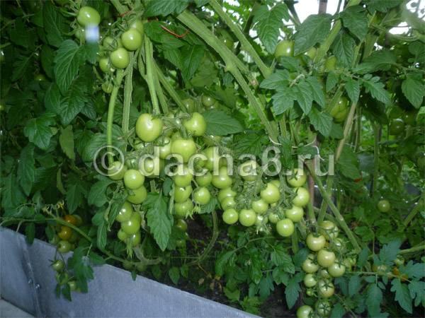 Пермакультура - залог хорошего урожая