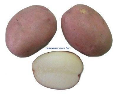 Картошка при жарке темнеет