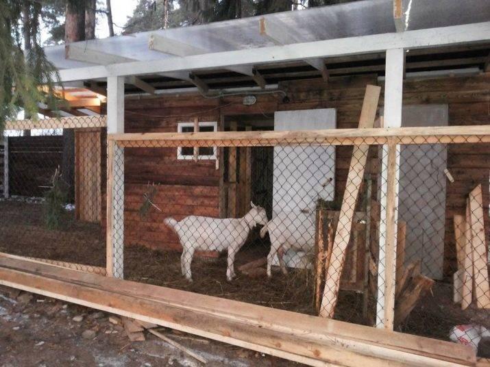 Как сделать сарай для коз своими руками: размеры, инструкции