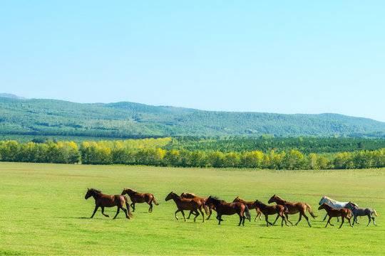 Виды галопа лошади и правила езды