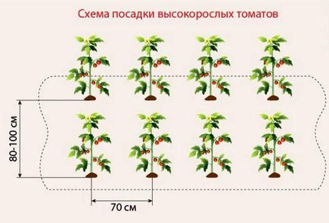 Все о корневой системе помидор: длина, глубина залегания, все особенности