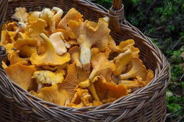 Названия и описание грибов растущих на пнях (+41 фото)