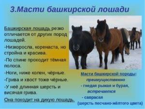 Как выглядят лошади башкирской породы