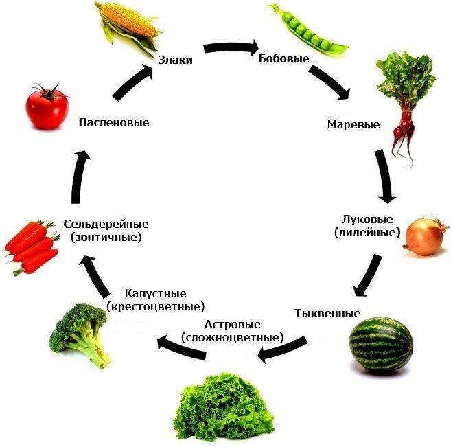 Севооборот овощных культур на огороде: схема, как правильно составить севооборот на дачном участке
