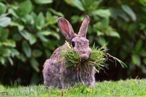 Что едят кролики, чем питаются: описание, характериситка