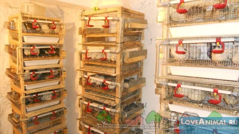 Клетка для бройлеров своими руками. описание, схема, чертежи с видео и фото