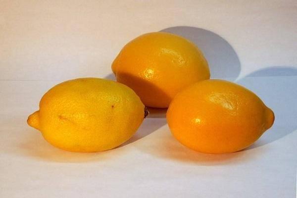 Комнатный лимон в домашних условиях • выращивание и уход