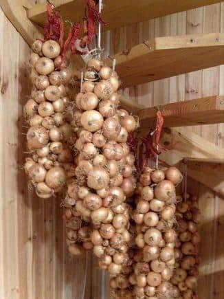 Как хранить лук в домашних условиях: как выбрать правильное место для зимовки и сколько урожай можно держать в квартире