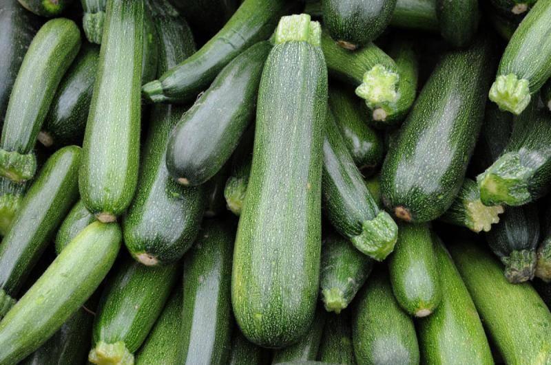 Кабачок цукеша: описание сорта, особенности посадки, выращивания и ухода