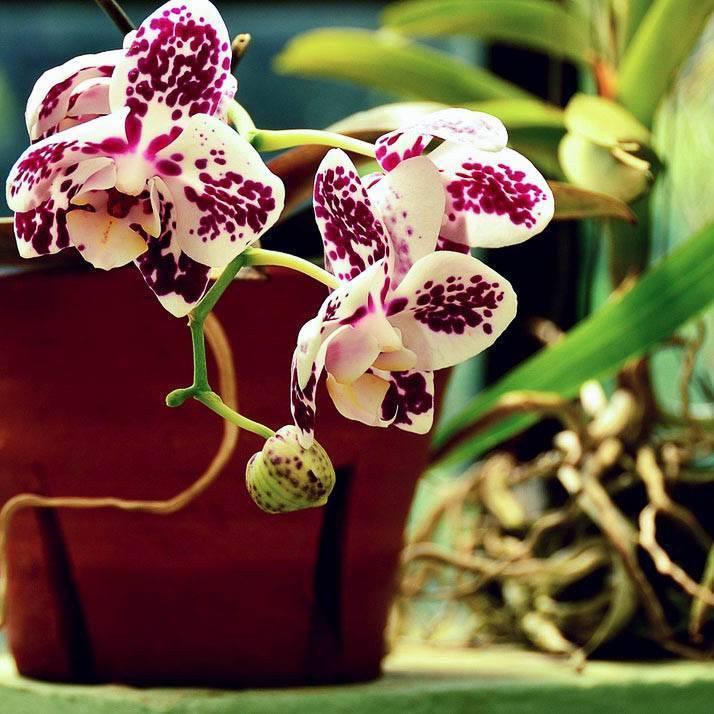 Рассказываем вам про грунты и добавки к ним для орхидей