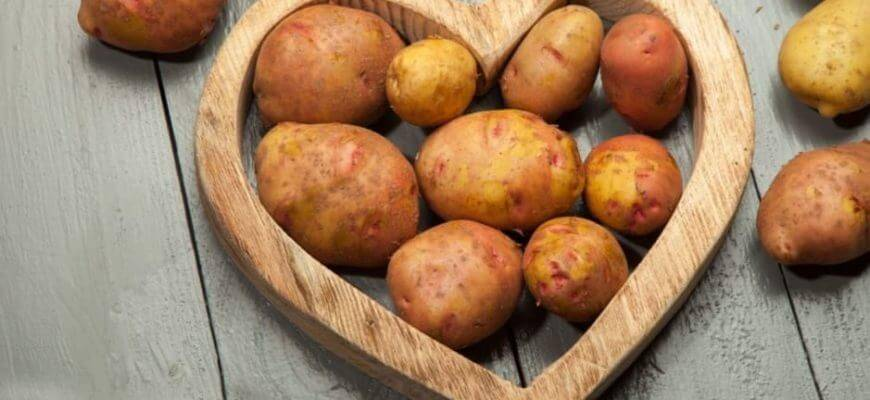 Сорта картофеля – выбираем самые урожайные и стойкие к заболеваниям