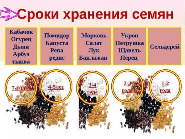 Двенадцать ошибок при выращивании рассады перца | fermer.ru - фермер.ру - главный фермерский портал - все о бизнесе в сельском хозяйстве. форум фермеров.