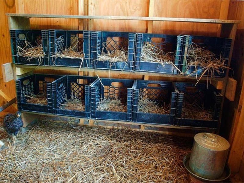 Как сделать гнездо для кур с яйцесборником своими руками: пошаговая инструкция
