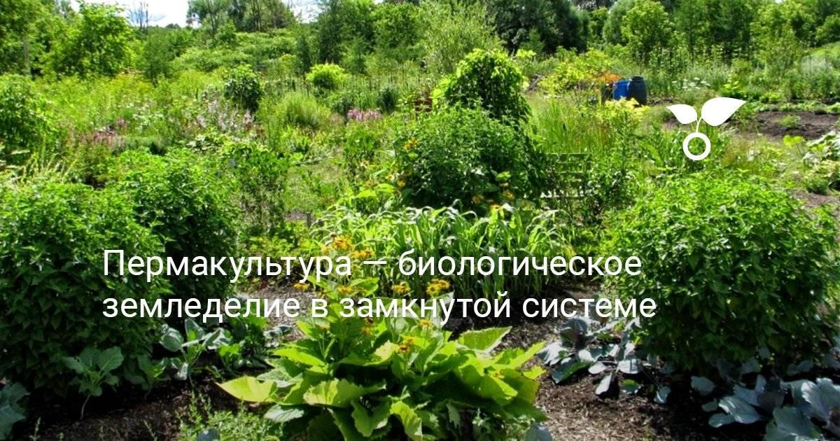 Пермакультура: практическое применение для сада и огорода