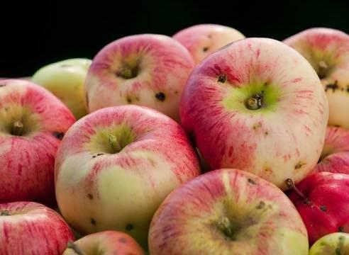 Узнаем, чем обработать яблони от червей в яблоках. советы профессионалов