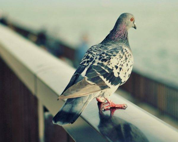 Как сделать своими руками отпугиватель птиц из пластиковых бутылок