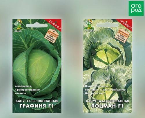 По какой причине свежая капуста горчит - агро журнал pole39.ru