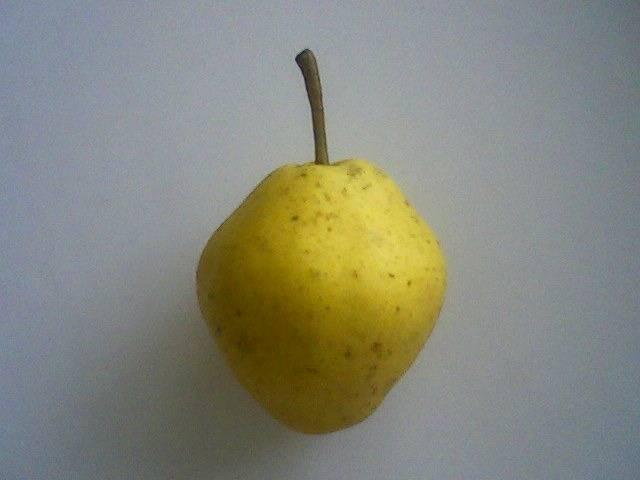 Выращиваем грушу любимица клаппа
