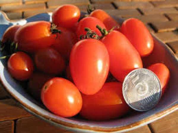 Компактный томат повышенной продуктивности. описание засолочного чуда