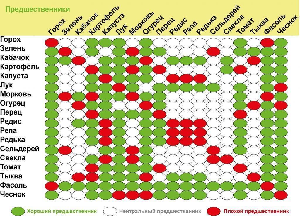 Предшественники овощей при посадке: таблица севооборота