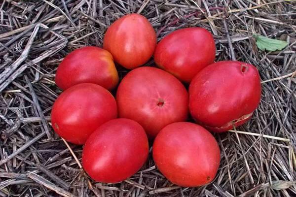 Описание томата Веселый гном