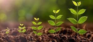 Стимуляторы роста для растений, корней и цветения: виды и применение
