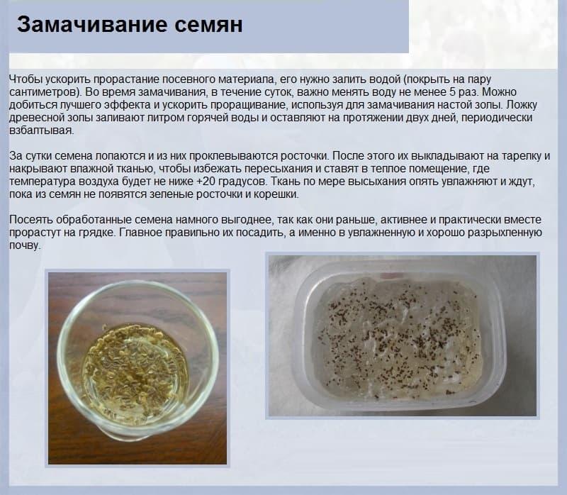 Подготовка семян огурцов к посеву на рассаду в домашних условиях