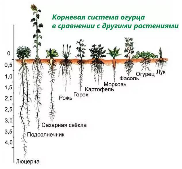 Комплексные удобрения для огурцов | огородовед