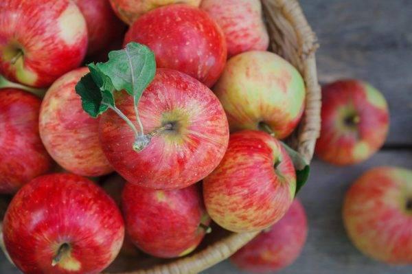 Содержание сахара в яблоках таблица